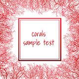 Texture of coral with frame for text Stock Images