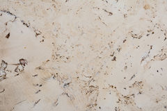 Texture of cork board wood surface, natural wooden decorative panel Stock Images