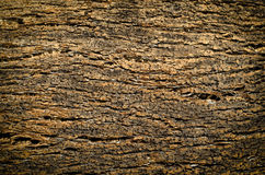 Cork texture. Texture of cork of quercus wood Stock Photography