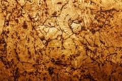 Texture of corkwood decoration material Stock Photography