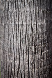 Texture of cortex of a palm tree Stock Image