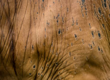 Texture of cow's skin. Royalty Free Stock Photography