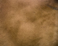 Texture of cow's skin. Stock Photography