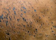 Texture of cow's skin. Royalty Free Stock Photos