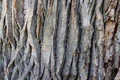 Texture créative de soulagement d'une vieille écorce de chêne Texture de relief de photographie stock