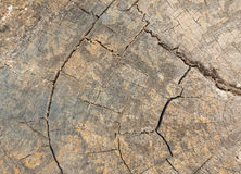 Texture of crack wood Stock Photography