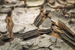 Texture of cracked dried earth, close up Stock Photos