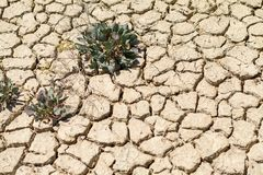 Texture of cracked earth, cracks in the earth from drought stock photography
