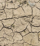 Texture of cracked earth Stock Photography