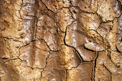 Texture of cracked earth Stock Photos