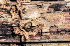 Texture of cracked rough wood surface painted. Texture of cracked old rough wood surface painted Stock Photography