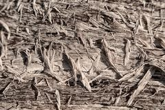 The texture of the cracked wood fibers and chips. In the sun royalty free stock photography
