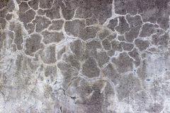 Texture of cracks Stock Photo
