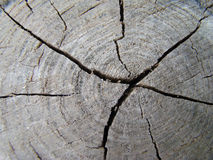 Texture. Cracks on the stump, broken wood, annual rings of a tree Stock Images