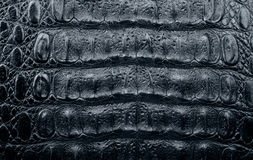 Texture of a crocodile leather Royalty Free Stock Photography