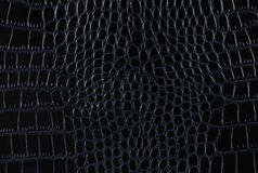 Texture of a crocodile leather royalty free stock image