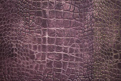 Texture of crocodile skin Stock Image