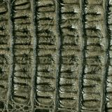 Crocodile skin leather texture. Texture of crocodile skin background macro close-up Royalty Free Stock Photo