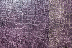 Texture of crocodile skin Stock Image