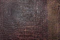 Texture of crocodile skin Stock Photo