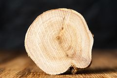 Texture of cross section juniper wood. Pattern of tree stump background. Circles slice of juniper. Texture of cross section wood logs. Pattern of juniper tree stock photos