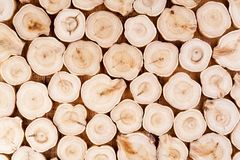 Texture of cross section juniper wood. Pattern of tree stump background. Circles slice of juniper. Texture of cross section wood logs. Pattern of juniper tree stock image