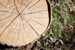 Texture of cross-section of log deck on background of grass. royalty free stock photography