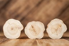 Texture of cross section juniper wood. Pattern of tree stump background. Circles slice of juniper. Texture of cross section wood logs. Pattern of juniper tree stock photo