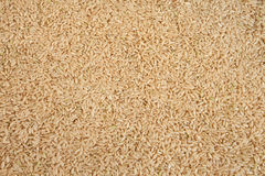 Texture crue intégrale de riz brun Image libre de droits