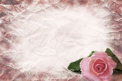 Texture of the crushed paper with a rose Royalty Free Stock Photography