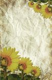 texture of the crushed paper with sunflowers Stock Photos