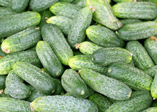 Texture of the cucumber is photographed Stock Image