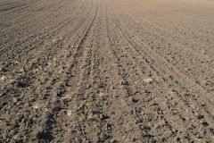 Texture of  the cultivated field. Royalty Free Stock Image