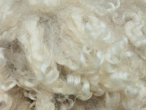 Texture of curly merino wool Royalty Free Stock Photography
