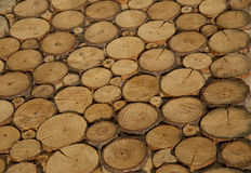 Texture cut logs. Rings on the fresh cut wood Stock Images