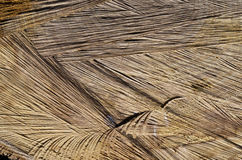 The texture of the cut tree Royalty Free Stock Image