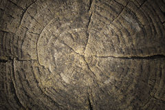 Texture of cut tree trunk Stock Images