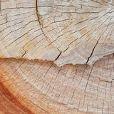 Texture of cut tree trunk. Close up texture of cut tree trunk Royalty Free Stock Photography