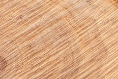 Wooden board with snub. Texture of a cut tree trunk close-up. Structure of a wooden surface Royalty Free Stock Images