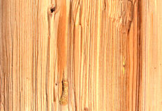 Texture 6198 - cut of wood logs Royalty Free Stock Image
