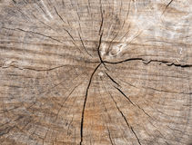 Texture of cut wood Royalty Free Stock Image