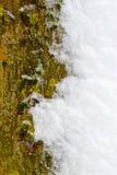 Texture d'écorce Photographie stock libre de droits