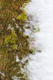 Texture d'écorce Photos libres de droits