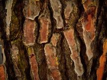 Texture d'écorce Photos stock