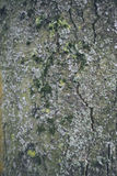 Texture 3 d'écorce photographie stock