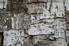 Texture d'écorce d'arbre de bouleau Image libre de droits