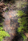Texture d'écorce avec de la mousse Photos libres de droits