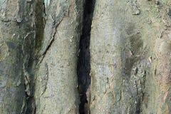Texture d'écorce d'arbre Image libre de droits