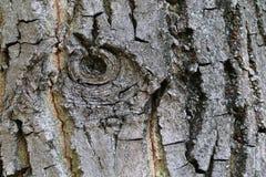 Texture d'écorce d'arbre Photos stock