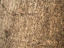 Texture d'écorce d'arbre Photos libres de droits